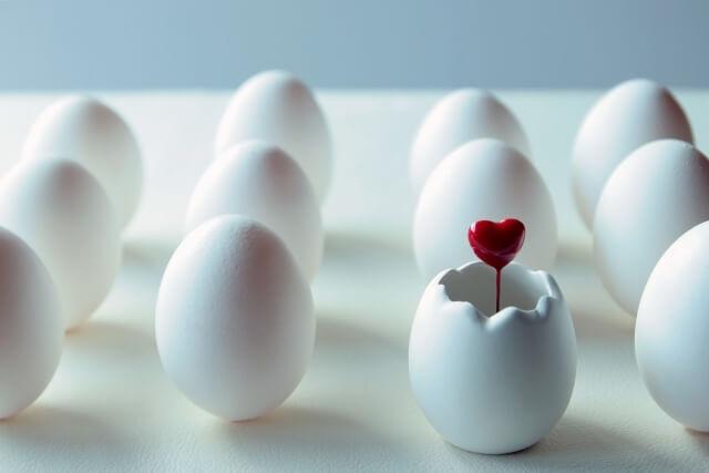 卵のタンパク質